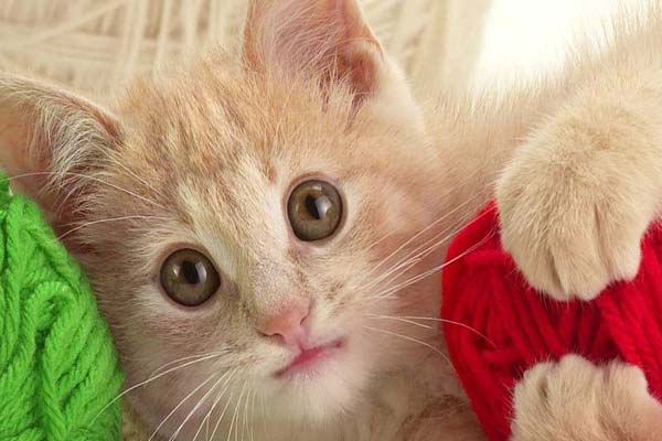 рыжий котенок на клубках с нитками