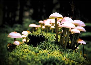 грибы на опушке