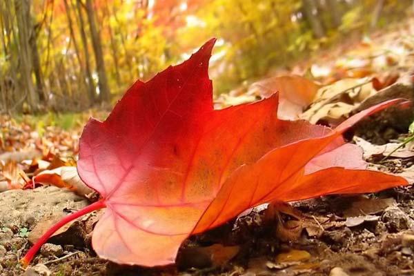 Осенний лист в лесу