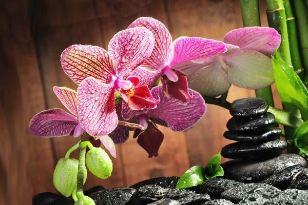 Композиция с орхидеей в интерьере