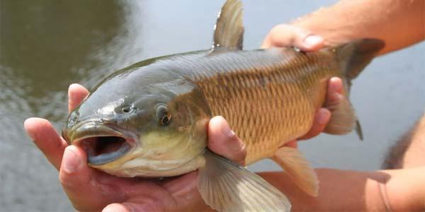 Рыба в руках