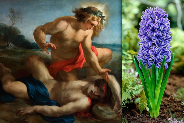 Аполлон оплакивает убитого Зефиром Гиацинта - картина
