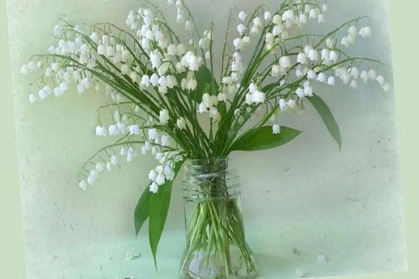 Букет белых цветов колокольчиков в прозрачной банке