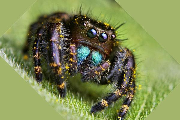 Разноцветный экзотический паук