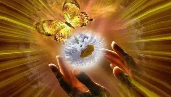 ладони, бабочка, солнце, цветок ромашки