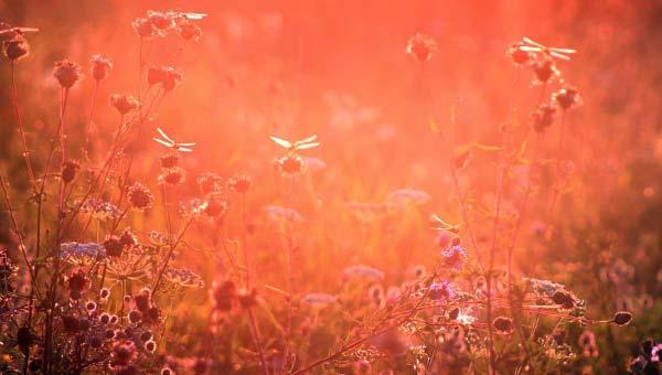 Летний луг, мотыльки, цветы, зной, жара