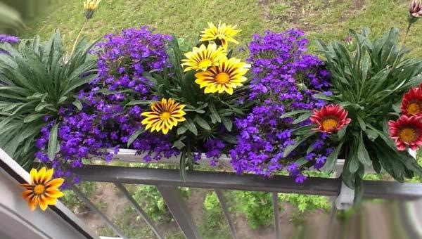 Гацания в подвесном контейнере для цветов на балконе